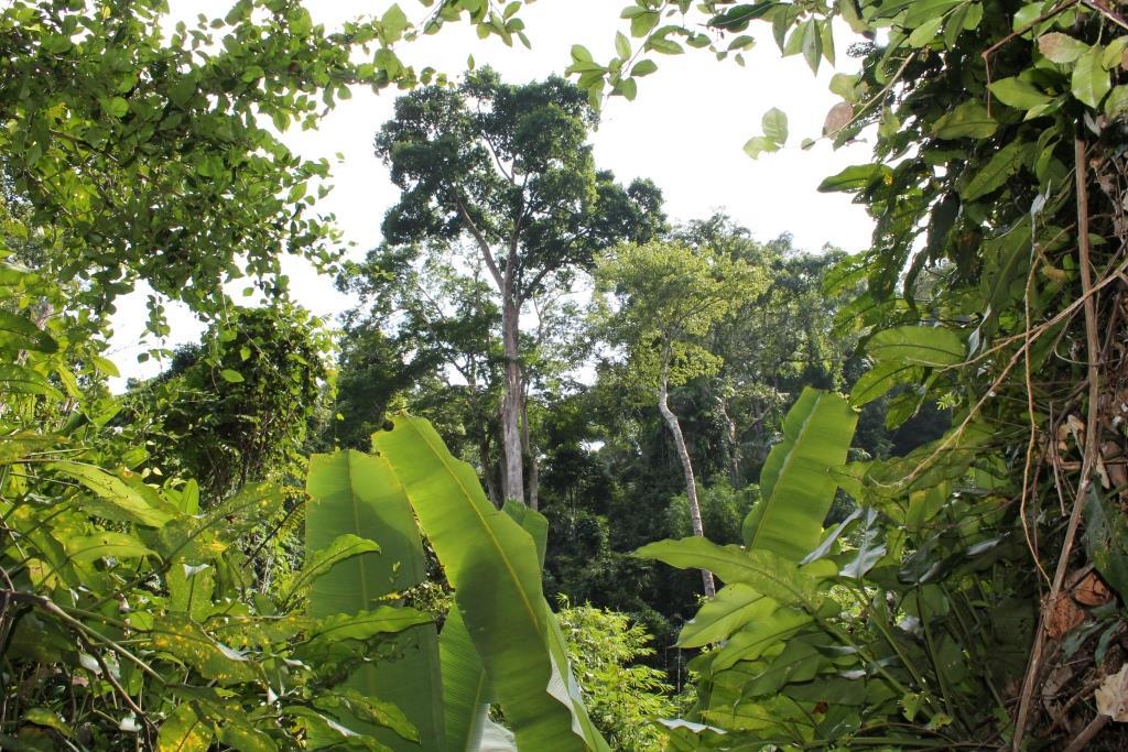 Urwald auf der Insel Phuket