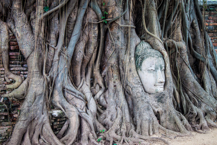 Bodhi Baum