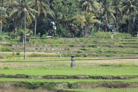 Ubud - Das künstlerische Zentrum Balis
