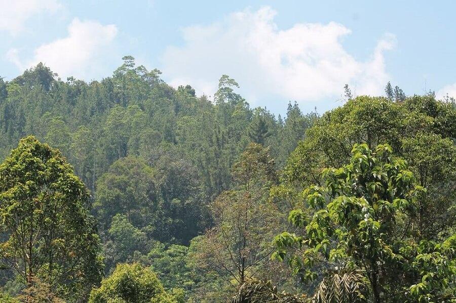 Sinharaja Forest auf Sri Lanka