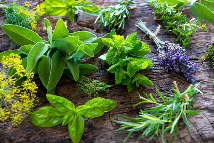 Entzündungshemmende Pflanzen zur Unterstützung einer gesunden Lebensweise